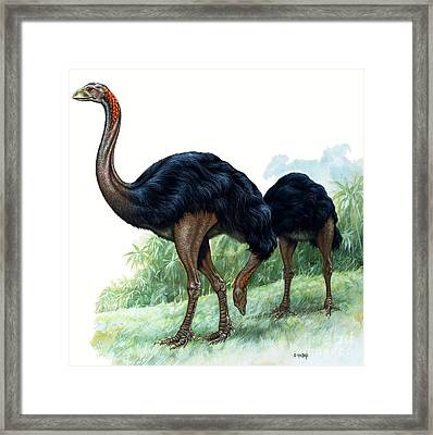 Pre-historic Birds Framed Print