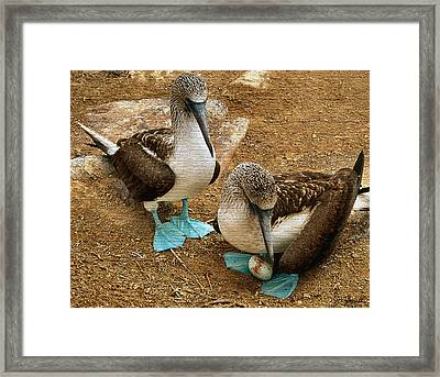 Pre Natal Checkup Framed Print by Joe Bonita