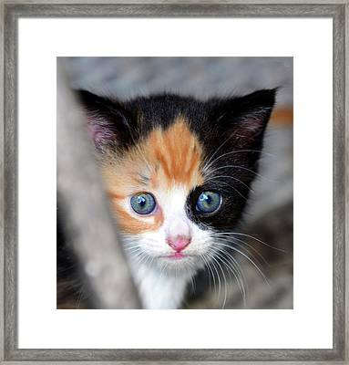 Framed Print featuring the photograph Precious by David Lee Thompson