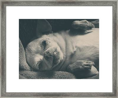 Precious Framed Print by Laurie Search