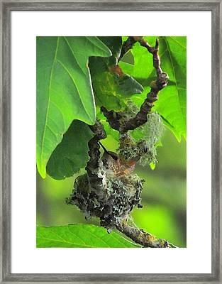 Precious Nature Framed Print