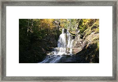 Precious Nectar Framed Print by David and Lynn Keller
