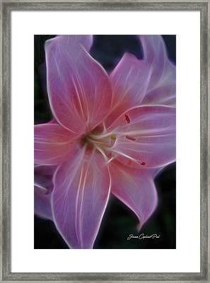 Precious Pink Lily Framed Print by Joann Copeland-Paul