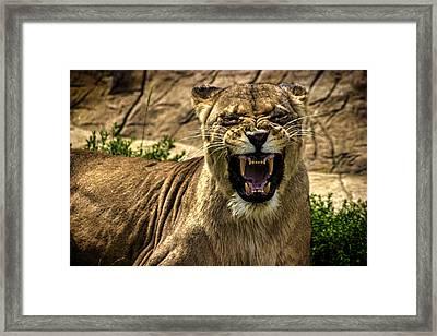 Predator Framed Print by Martin Newman