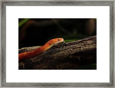 Predator Framed Print by Svetlana Svetlanistaya