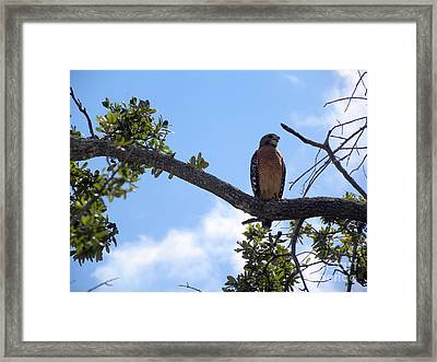 Framed Print featuring the photograph Predator by Terri Mills