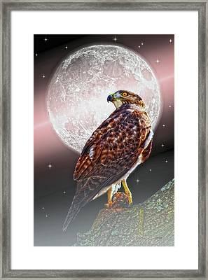 Predator Framed Print by Tom York Images