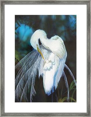 Preening Egret  Sold Framed Print