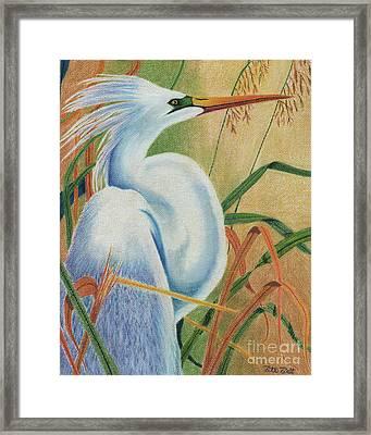 Framed Print featuring the drawing Preening Egret by Peter Piatt