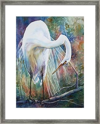 Preening Egret Framed Print by Sue Zimmermann