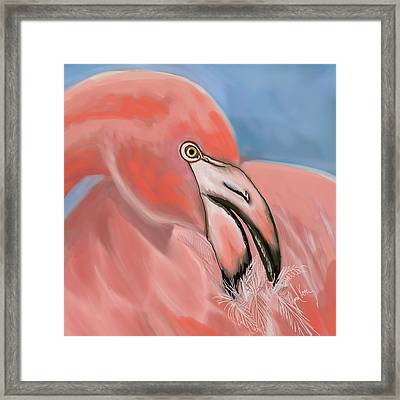 Preening Flamingo Framed Print by Janal Koenig