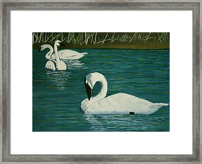 Preening Swans Framed Print by Robert Tower