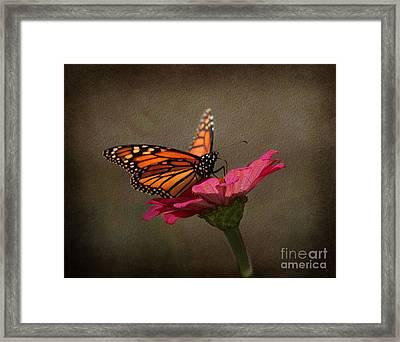 Prefect Landing - Monarch Butterfly Framed Print by Judy Palkimas
