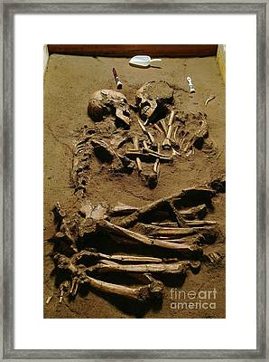 Prehistoric Skeletons Framed Print by Science Photo Library