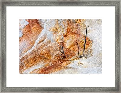 Prehistoric Trees Framed Print by Todd Klassy