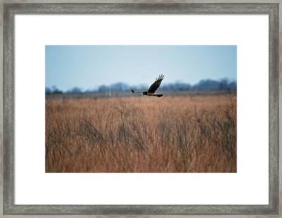 Framed Print featuring the photograph Prepare For Landing by Teresa Blanton