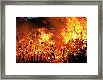 Prescribed Burn Framed Print