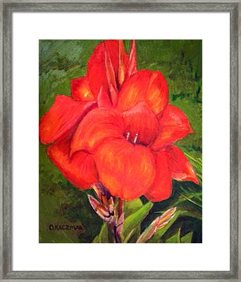 Presidential Canna Framed Print by Olga Kaczmar