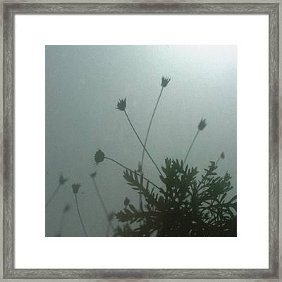 Pressed Daisy Bush Green Framed Print by Stan Magnan