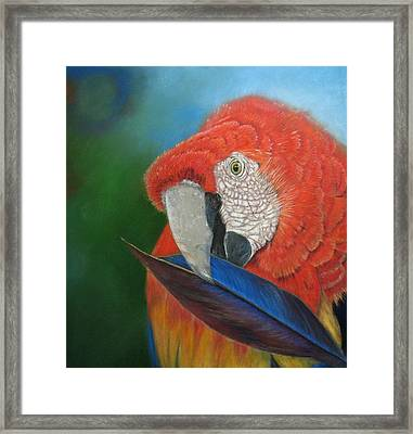 Presumida Framed Print