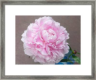 Pretty And Pink Framed Print by Barb Montanye Meseroll