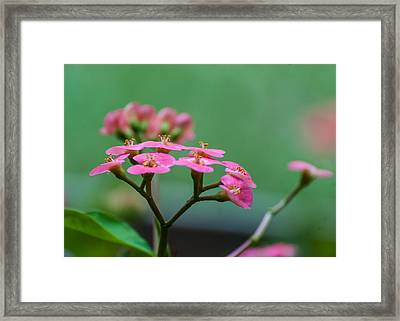 Pretty And Pink Framed Print