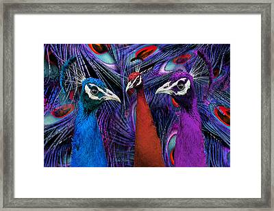 Pretty As A Peacock Framed Print