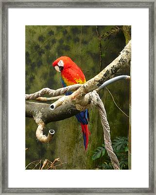 Pretty Bird Framed Print by Connie Young