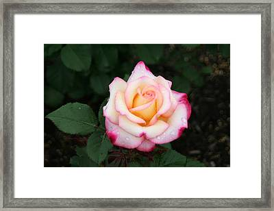 Pretty Bloom Framed Print by Gerald Mitchell