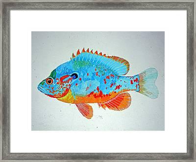Pretty Blue Fish Framed Print by Don Seago