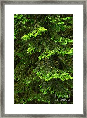 Pretty Branches Framed Print