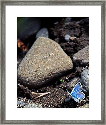 Pretty Butterfly Framed Print