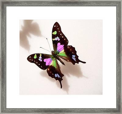 Pretty Butterfly Framed Print by Rosalie Scanlon
