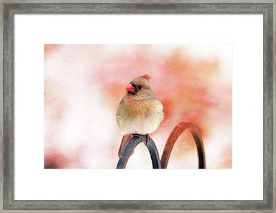 Pretty Cardinal Framed Print