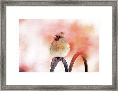 Pretty Cardinal Framed Print