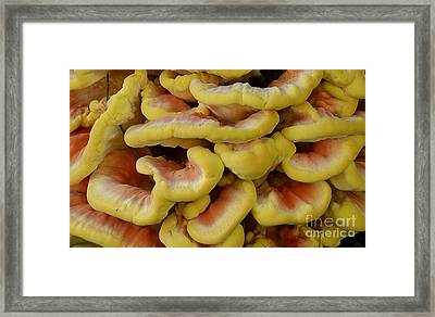 Framed Print featuring the photograph Pretty Chicken by Randy Bodkins