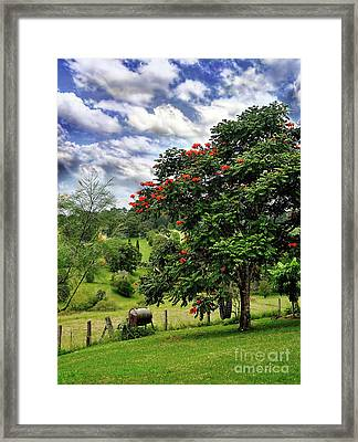 Pretty Countryside Framed Print by Kaye Menner