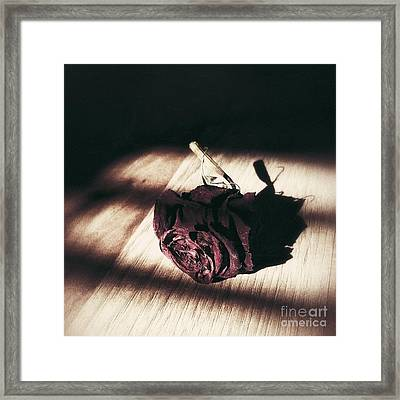 Pretty Dead Rose Resting In The Warm Sun Framed Print
