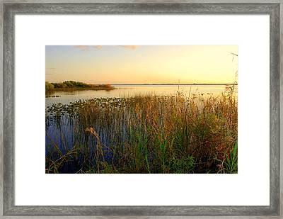 Pretty Evening At The Lake Framed Print by Susanne Van Hulst