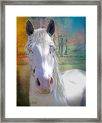 Pretty Eyes Framed Print by Bonnie Willis