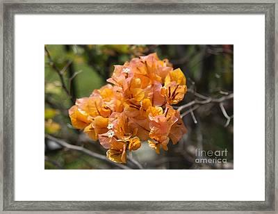 Pretty Flower Framed Print by Dick Willis
