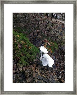 Pretty Forest Underneath  Framed Print by Steven Digman