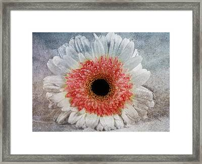 Pretty Gerbera Macro Framed Print by Georgiana Romanovna