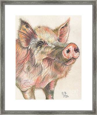 Pretty Imporkant Pig Framed Print by Chris Bajon Jones