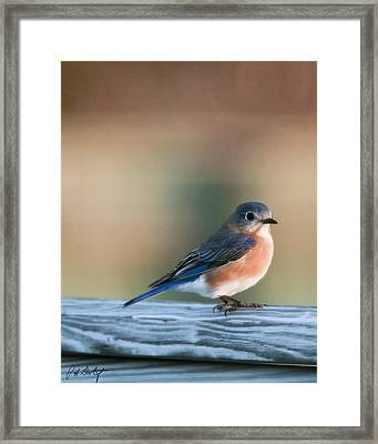Pretty In Blue Framed Print by Phill Doherty
