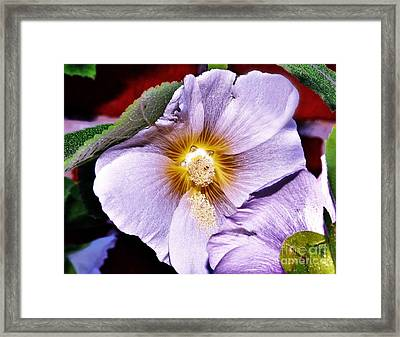 Pretty In Mauve Framed Print