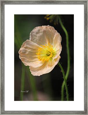 Pretty In Peach Framed Print by Suzanne Gaff