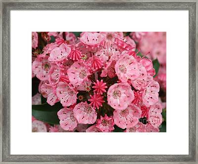 Pretty In Pink Framed Print by Amy Holmes