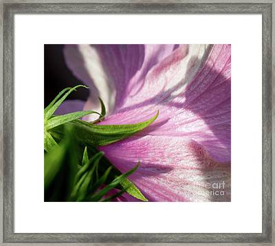 Pretty In Pink Framed Print by Carol Lloyd