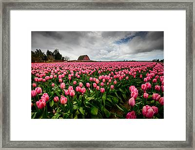 Framed Print featuring the photograph Pretty In Pink by Dan Mihai